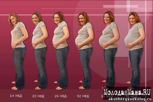 Физиологические изменения в организме беременной