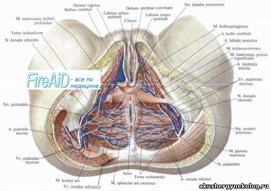 21 — a sacralis mediana